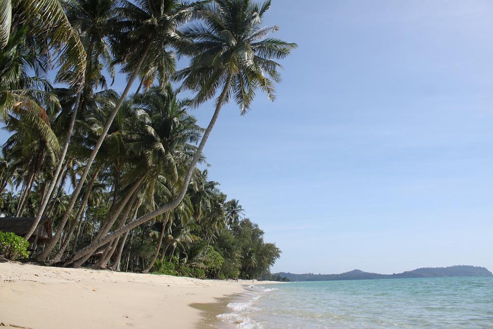Thailand The Island Of Koh Kood Palm Trees Beach