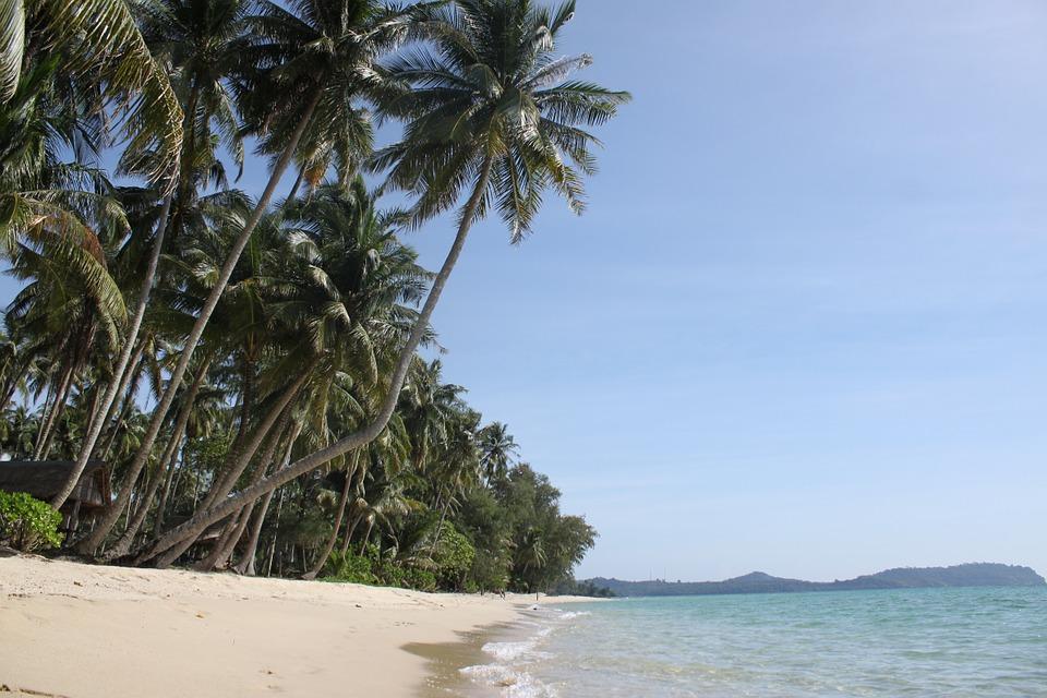 Thailand The Island Of Koh Kood Palm Trees Beach