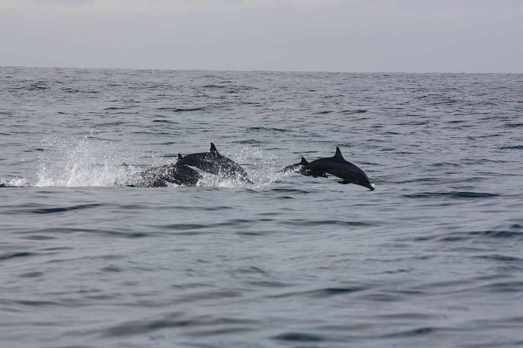 Mirissa Whale watching | Image Credit - Arian Zwegers | CC BY 2.0 via Wikipedia Commons