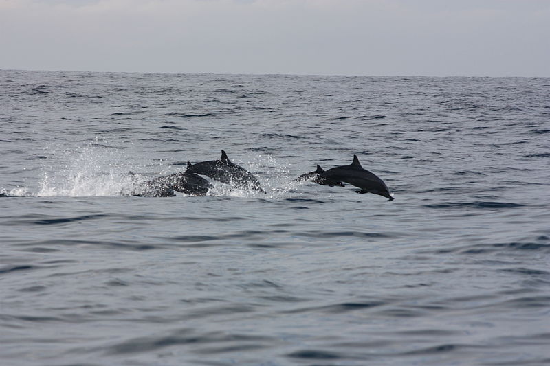Mirissa, whale and dolphins watching | Image Credit - Arian Zwegers CC BY 2.0 Via Wikimedia Commons