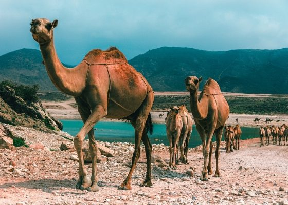 Attractions in Oman