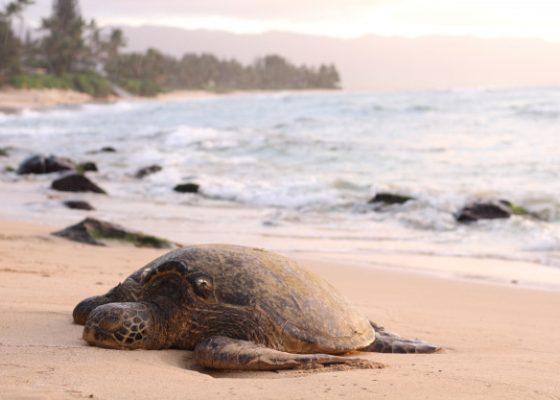 Turtle Watching in Sri Lanka