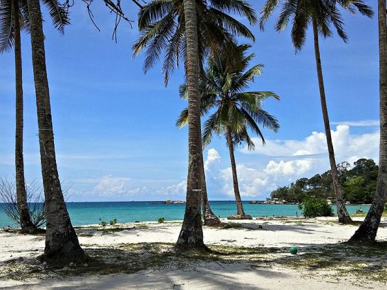 Andrian Vernandes, Coconut Tree and The Blue-Green Sea, Pantai Trikora, Kabupaten Bintan