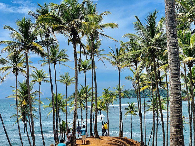 Coconut tree hills