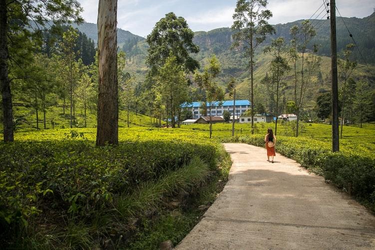Nuwara Eliya Tea Estate